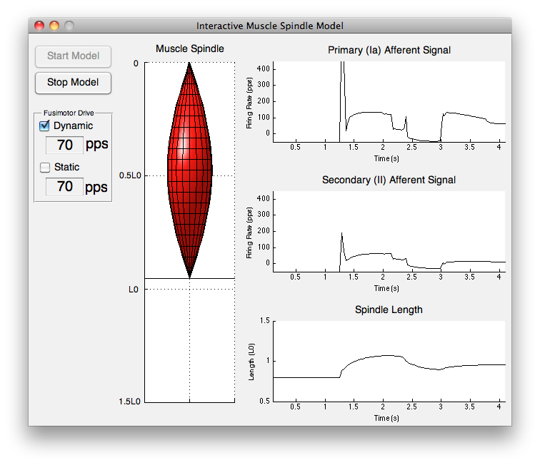 Interactive Muscle Spindle Simulation